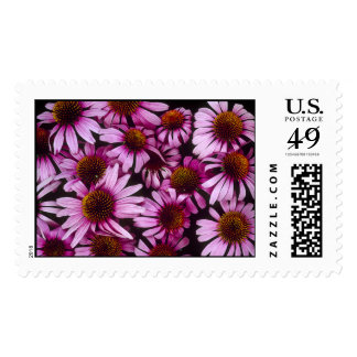 Native Echinacea Flowers Postage
