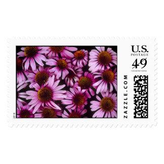 Native Echinacea Flowers Stamp