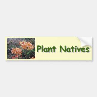 Native Flame Azalea Bumper Sticker