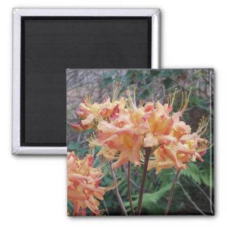 Native Flame Azalea Magnet