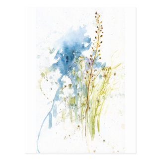 Native-grasses Postcard