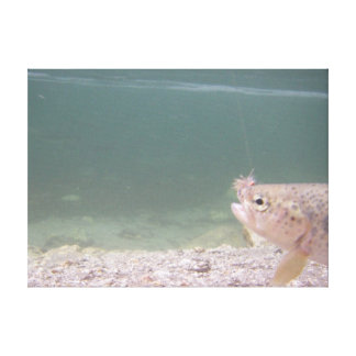 Native Rainbow Trout Gallery Wrapped Canvas