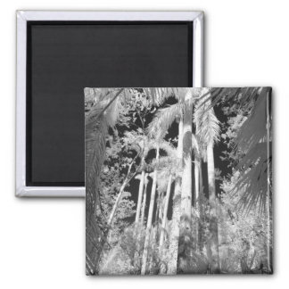 Native Royal Palms in Fakahatchee Strand, 2 Inch Square Magnet
