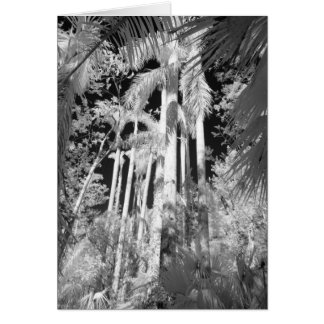 Native Royal Palms in Fakahatchee Strand, Card