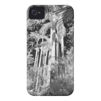 Native Royal Palms in Fakahatchee Strand, iPhone 4 Cover