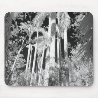 Native Royal Palms in Fakahatchee Strand, Mouse Pad