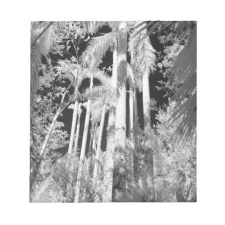 Native Royal Palms in Fakahatchee Strand, Notepad