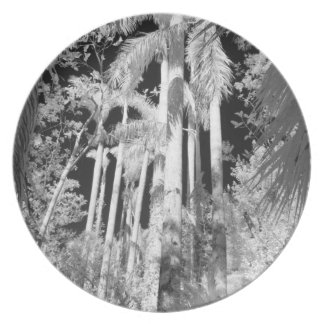 Native Royal Palms in Fakahatchee Strand, Plate