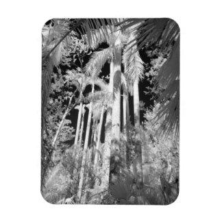 Native Royal Palms in Fakahatchee Strand, Rectangular Photo Magnet