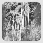 Native Royal Palms in Fakahatchee Strand, Square Sticker