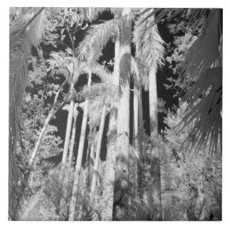 Native Royal Palms in Fakahatchee Strand, Tile