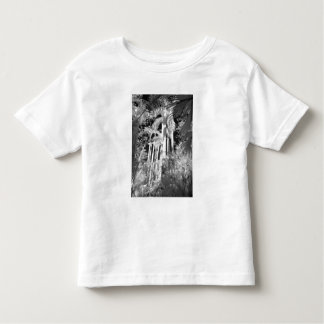 Native Royal Palms in Fakahatchee Strand, Toddler T-shirt
