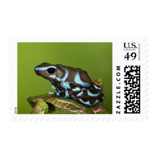 Native to Panama Postage Stamp