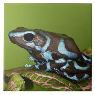 Native to Panama Ceramic Tiles
