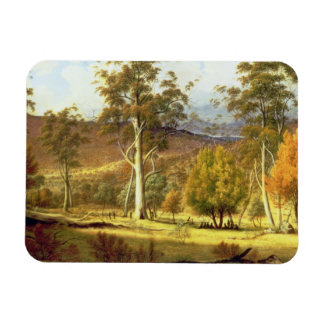 Natives in the Eucalypt Forest on Mills Plains, Pa Magnet