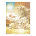 Natividad de Jesús del bebé con los corderos y el  Tarjetas Postales