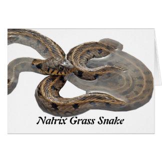 Natrix Grass Snake Card