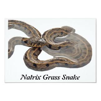 Natrix Grass Snake Custom Invites
