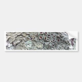 Natural Australian Lichen growing on fallen tree Bumper Sticker