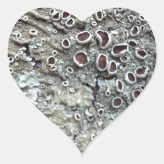 Natural Australian Lichen growing on fallen tree Heart Sticker