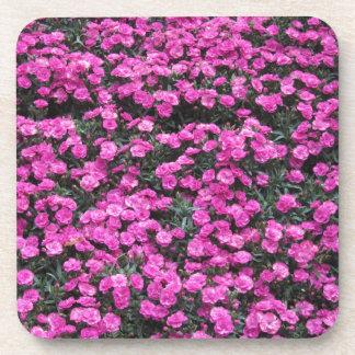 Natural background of purple carnation flowers beverage coaster