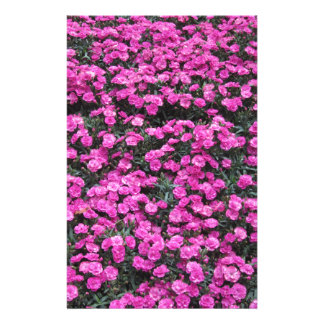 Natural background of purple carnation flowers stationery