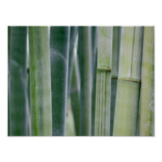 Natural Bamboo Zen Background Customized Template Poster at Zazzle