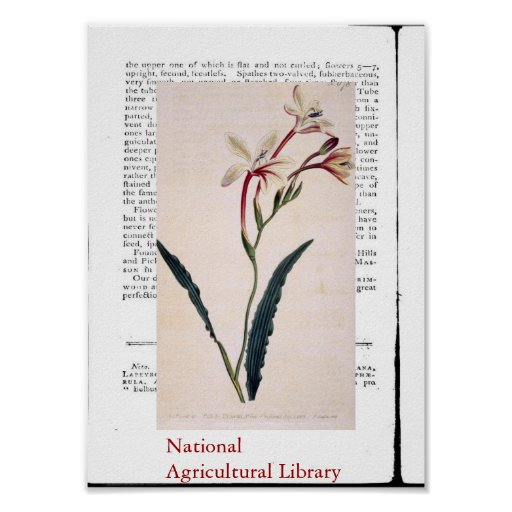 Natural Botanical Print Three