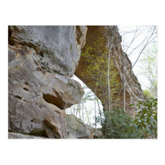 Natural Bridge Kentucky Postcard