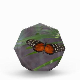 Natural Butterfly Acrylic Award