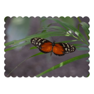 Natural Butterfly Card