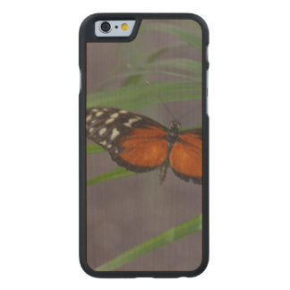 Natural Butterfly Carved Maple iPhone 6 Slim Case