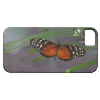 Natural Butterfly iPhone SE/5/5s Case