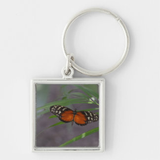 Natural Butterfly Keychain