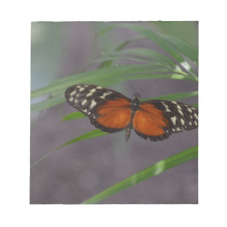 Natural Butterfly Notepad