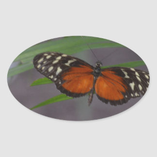 Natural Butterfly Oval Sticker