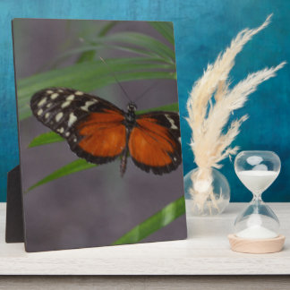 Natural Butterfly Plaque