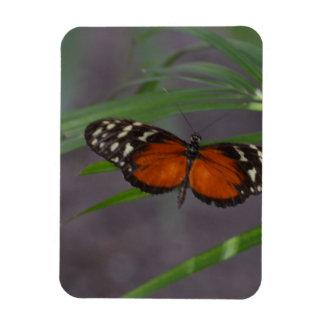 Natural Butterfly Rectangular Photo Magnet