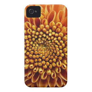 natural collection vol 5 Flowers mums yellow Case-Mate iPhone 4 Case