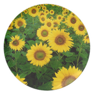 natural collection vol 7 sun flower dinner plate