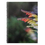 Natural Cuaderno