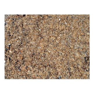 Natural Dry Grass Background Texture Postcard