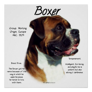 Natural Ear Boxer Meet the Breed Poster