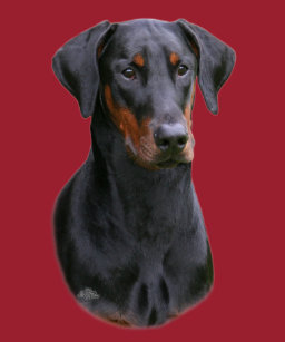 Doberman Pinscher With Natural Ears Clothing Zazzle