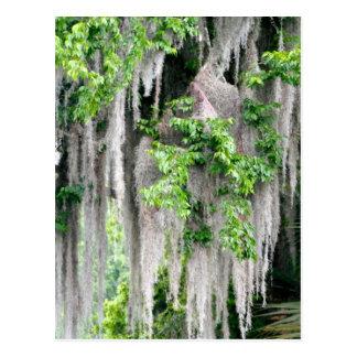 Natural Florida Postcard