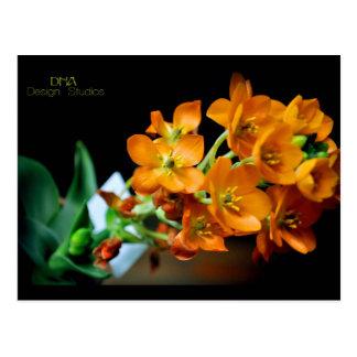Natural Flower Beauty Postcard
