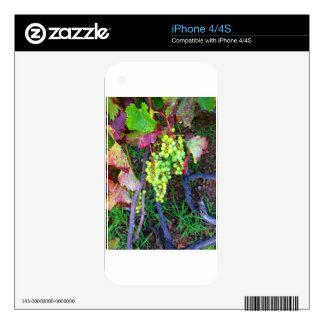 Natural Grapes Decal For The iPhone 4