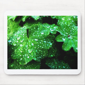 natural  Green leaf leaves Trees Earth Beautiful D Mouse Pad
