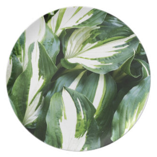natural  Green leaf leaves Trees Earth Beautiful D Party Plate