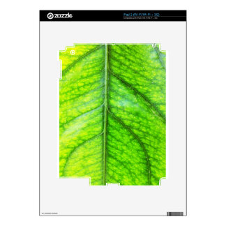 natural  Green leaf leaves Trees Earth Beautiful D Skins For iPad 2